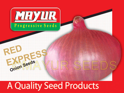 Red Express Onion Seeds