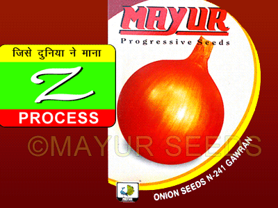 N-241 GAWRAN Onion Seeds