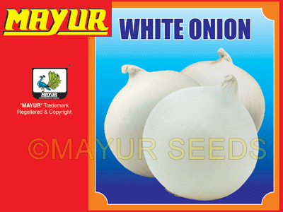 White round Onion Seeds
