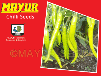 MAYUR-07(magic) Chilli Seeds