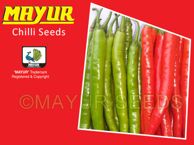 MAYUR-09(TARA) Chilli Seeds