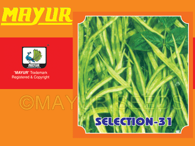 Mayur-31 Cluster Beans Seeds
