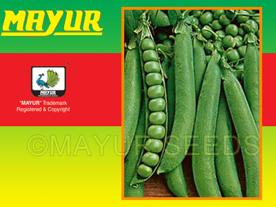 Mayur-Early Pea Seeds