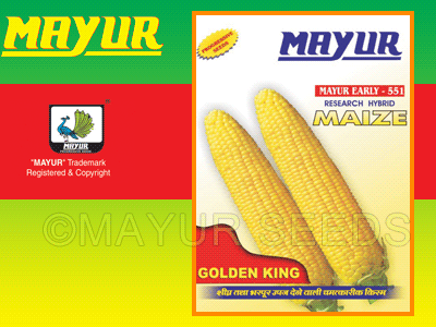 M-551(Yellow) Maize Seeds