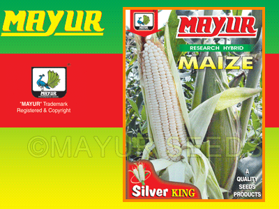 M-751(White) Maize Seeds