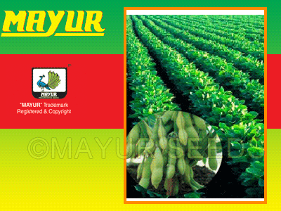 Mayur Gold Soyabeen seeds